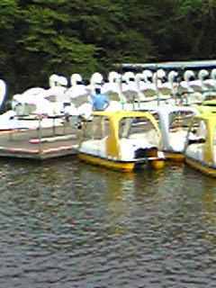 整列白鳥ボート