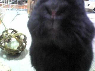 クロちゃんの鼻