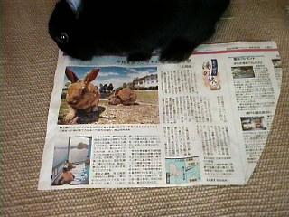 記事を読むクロちゃん