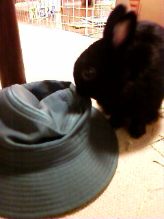 帽子とクロちゃん