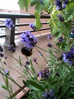 大きなハチ