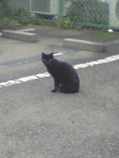 クロ猫さん