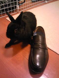 靴といっしょに