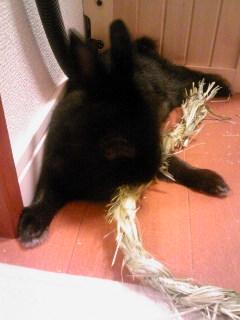大好き牧草ロープ