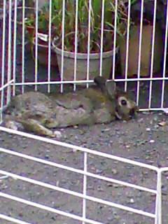 日野で見つけたウサギ