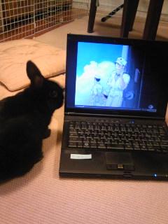 クロちゃんもパソコン欲しい