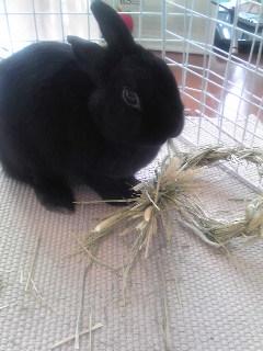 ウサギの鏡開き
