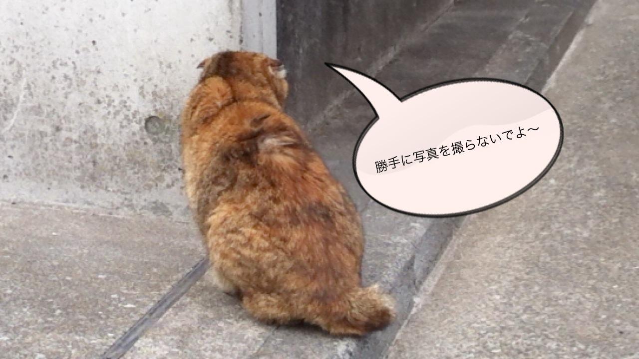 吉祥寺のネコ その1