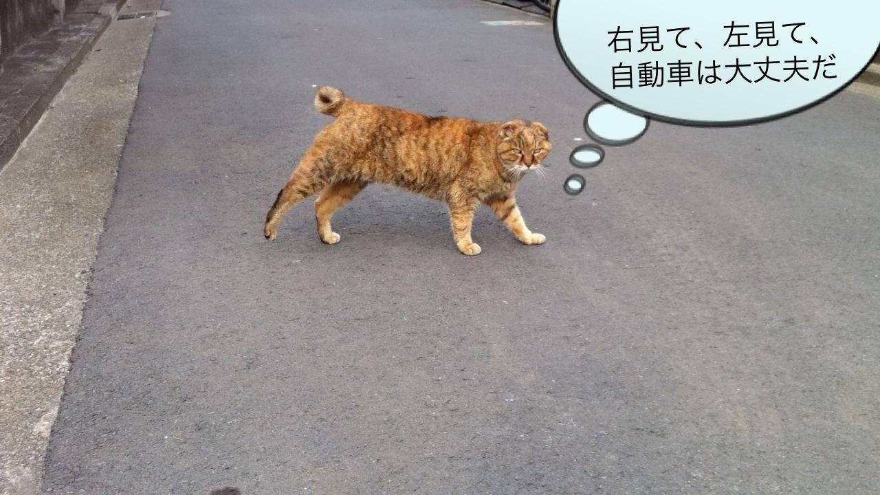 吉祥寺のネコ その2