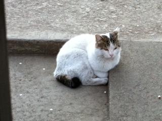 今日のネコさん