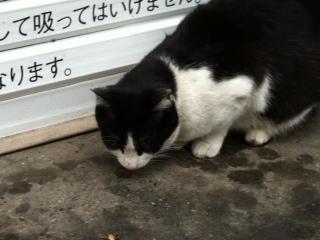 ヨドバシの裏手の猫