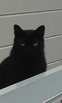 雨の中の黒猫さん