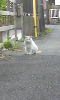 人間くさい猫