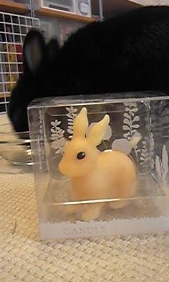 ウサギのキャンドル