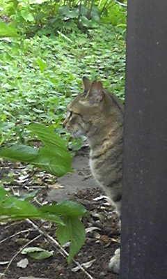 横顔がキリリとした猫