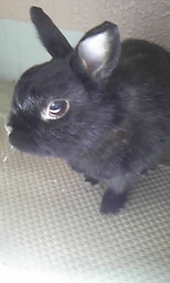 黒いウサギもくっきり