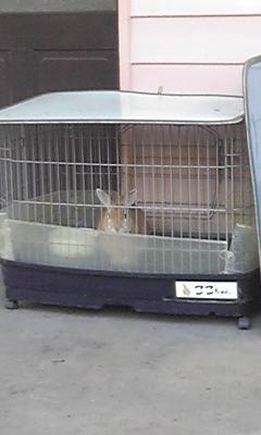 幼稚園のウサギちゃん