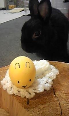 イースターエッグとクロウサギ