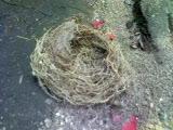 小鳥の巣?