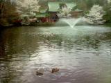 日曜の井の頭公園弁天様
