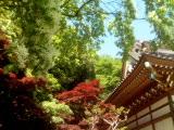 深大寺の木々