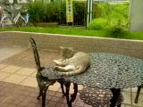 朝からお昼寝の子猫
