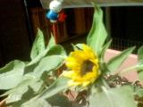 ミニひまわりが咲いた