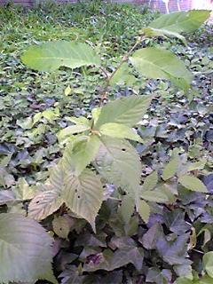 中庭に生えた植物シリーズ3