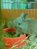 仔ウサギちゃん